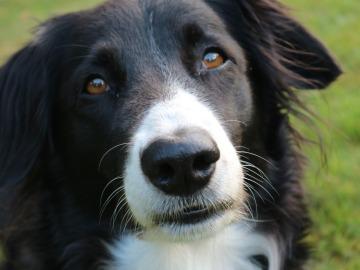7 hábitos que tu perro odia