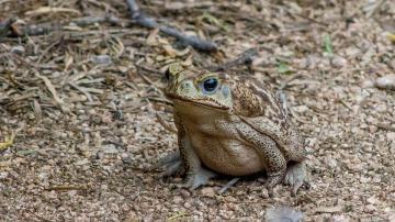 Crean un sistema para clasificar las especies invasoras en función del daño que originan