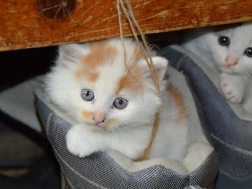¿Por qué es bueno tener un gato en casa?