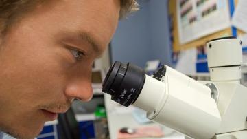Científicos lusos investigan el autismo con minicerebros
