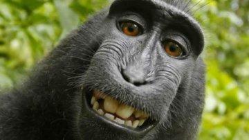 El caso del selfie 'más mono' de la historia ya está resuelto