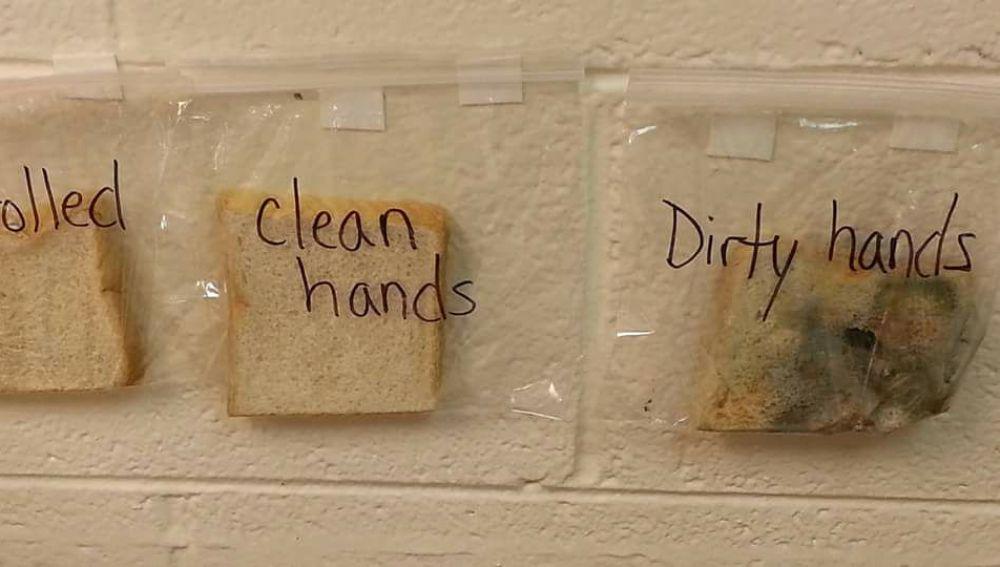 El 'experimento limpio' realizado por una profesora en EEUU para mostrar la importancia de la higiene