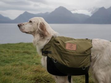 Los perros también salvan vidas