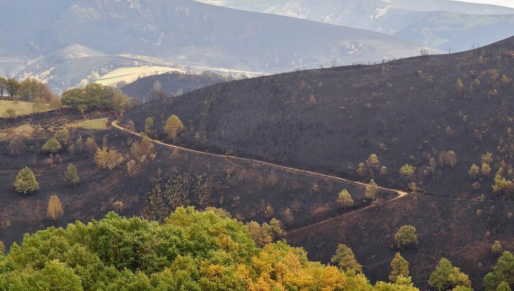 Vista de una zona calcinada por el incendio que afectó a Os Ancares