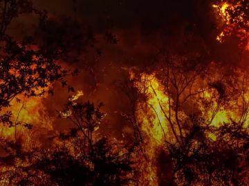 El bosque gallego que fue capaz de sobrevivir a los incendios