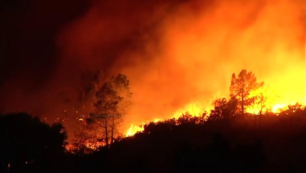 ¿Qué consecuencias tiene para el medio ambiente los incendios forestales de Galicia?
