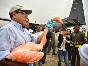 Animales silvestres, víctimas del tráfico ilegal, recuperan su libertad en Colombia