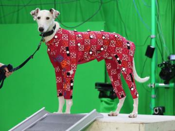 Perros sin hogar se convierten en modelos de videojuegos y películas de animación
