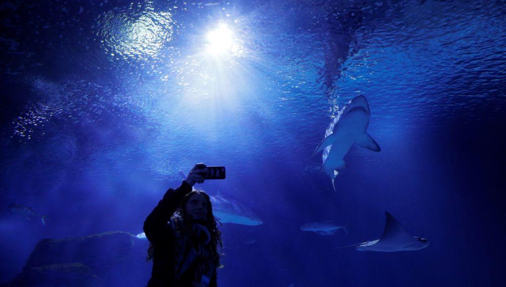 Sensores biodegradables para evaluar la salud de los océanos