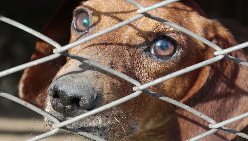Una ONG denuncia la existencia de 'fábricas' de perros encerrados en jaulas en China