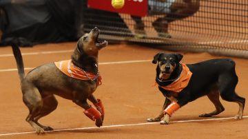Perros abandonados se convierten en recogepelotas con el objetivo de ser adoptados