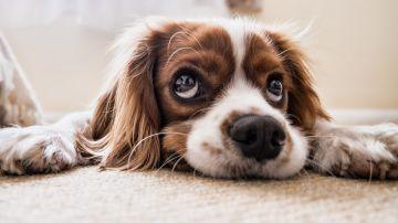 Aumenta la adopción y disminuye la compra de mascotas