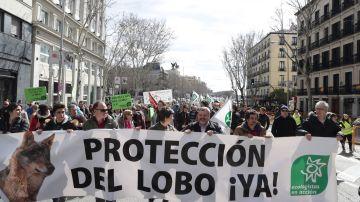 Unas 3.000 personas se manifiestan en Madrid para exigir la protección  del lobo ibérico