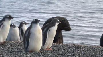 El paraíso helado de la Antártida: así será el futuro santuario para la vida marina