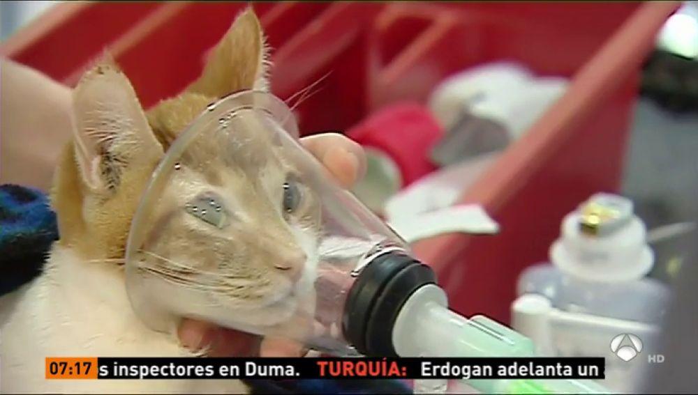Un implante hecho con una impresora en 3D para un gato