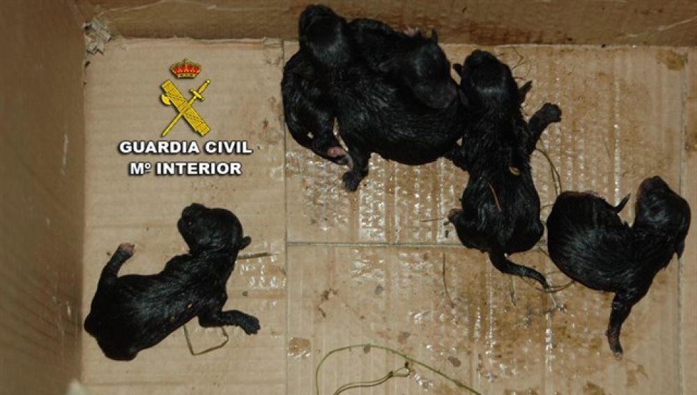 Cinco cachorros abandonados en Poio, Pontevedra