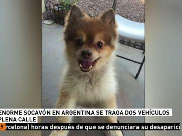 Muere un perro que viajaba en la bodega de un avión en EEUU